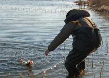 Весенняя ловля судака на пруду