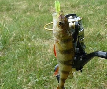 Как подобрать место и снасти для ловли окуня на реке