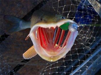 Правильная обработка и приготовление пойманной рыбы