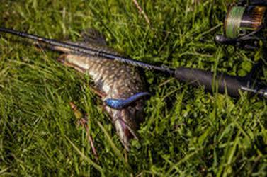 Обычный рыболовный день