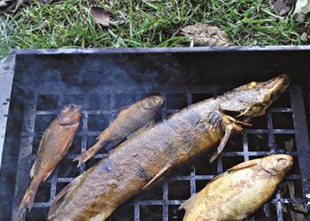Как правильно закоптить улов