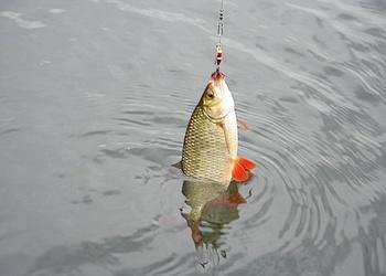 Ловля белой рыбы спиннингом
