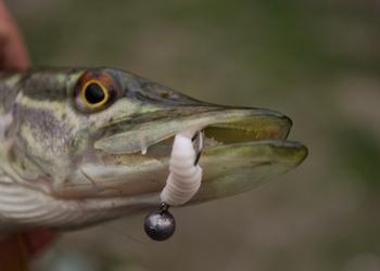 Целенаправленная ловля шнурья на микроджиг