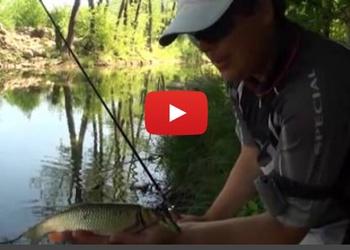 Рыболов-эксперт - Ловля голавля